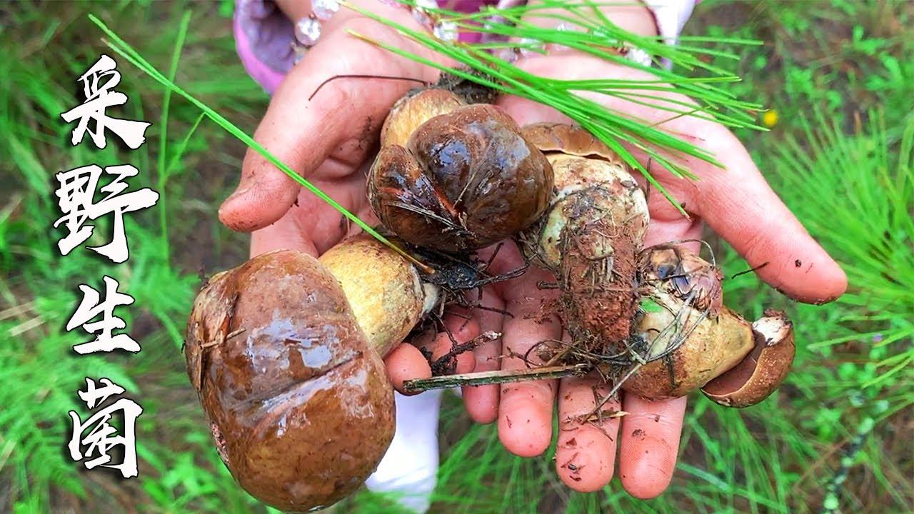 雲南的野生菌瘋長,小伙帶家人上山撿菌,沒想到收穫這麼多! 【高小瘦】