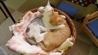 子猫ちゃん達の寝顔癒される~♡ しかし一か所にすごい集まって寝てる~...