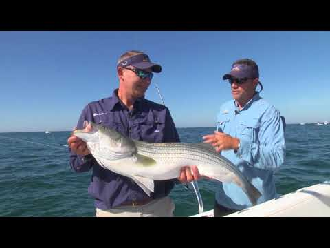Catching Cape Cod Stripers In The Rips (Full Episode)