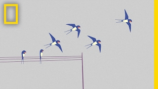 Do You Know Your Birds? This Animation Can Help You Identify Five | Short Film Showcase