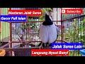 Masteran Jalak Suren Gacor Full Isian Jalak Suren Lain Langsung Nyaut Bunyi  Mp3 - Mp4 Download