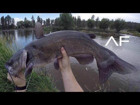 ARIZONA URBAN POND FISHING!!! FRANCIS SHORT POND!!!