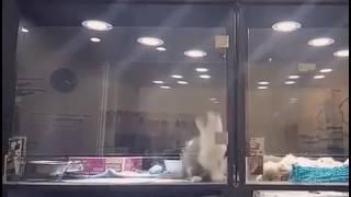 Котик и щенок закрыты