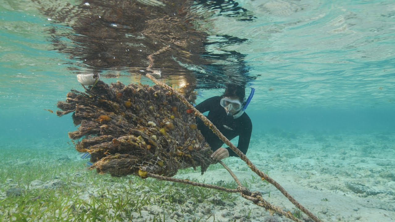 Episode 12: Caribbean Spiny Lobster | Water as Habitat - YouTube