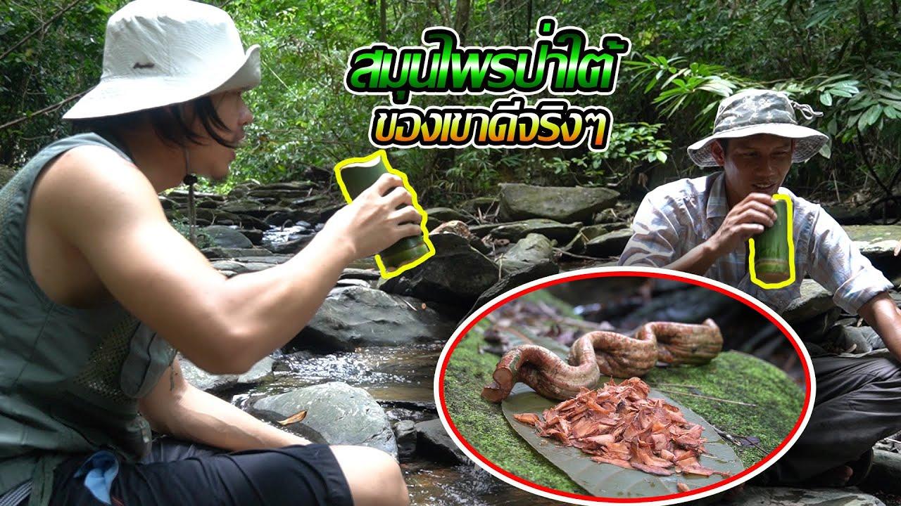 ตามหาสุดยอดสมุนไพรป่าใต้สุดโหด....^_^[Jungle Funny]