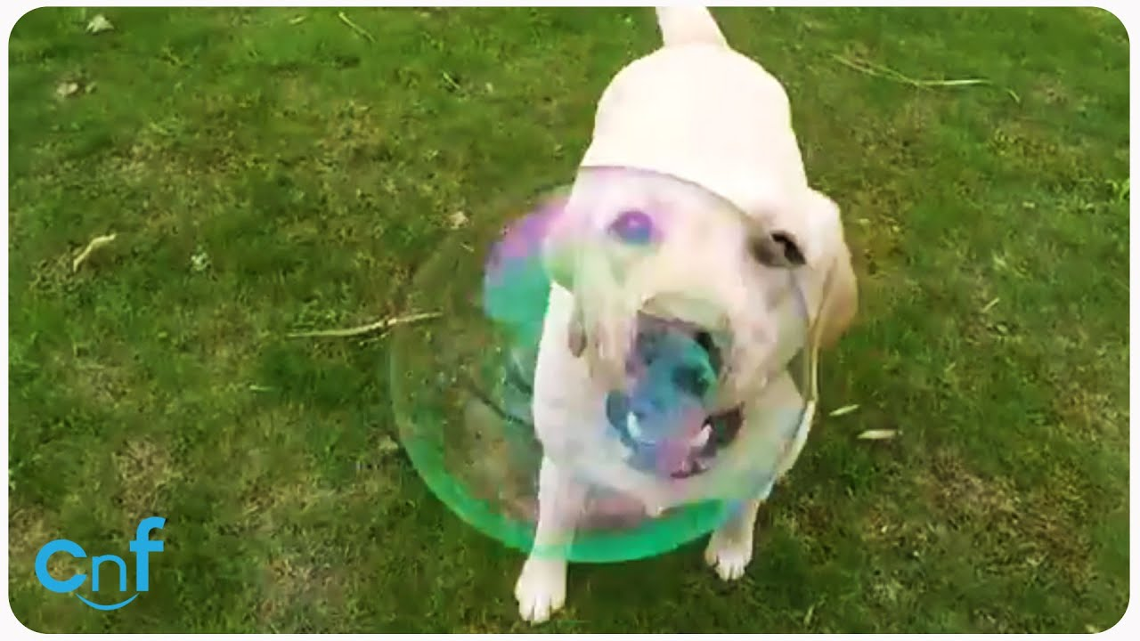 Stella Loves Popping Bubbles | No Bubble Left Behind
