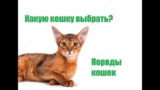 Какую Кошку Выбрать & Выбор Кошки В Семью. Ветклиника Био-Вет
