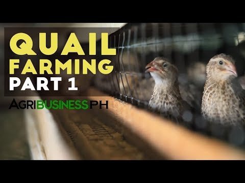 How to start quail farming business | Quail farming part 1 #Agribusiness