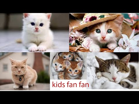 Baby Cats - Cute and Funny Cat Videos I #KidsFunFan