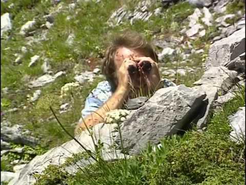 La faune et la flore en montagne (Documentaire animalier)