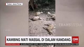 Kambing Mati Massal di Dalam Kandang | REDAKSI MALAM (18/01/21)