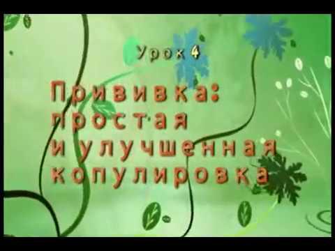 Прививка плодовых деревьев лучшие способы © - Уроки Николая Рабушко.