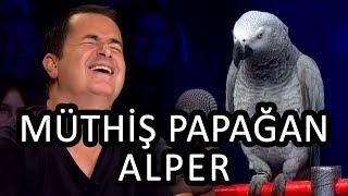 Papağan Alper ve Cuma Kaya | Yetenek Sizsiniz Türkiye Yarı Final Video