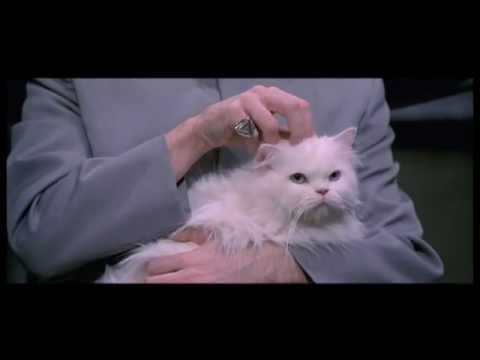 Movie Cat - Mr Bigglesworth gets upset