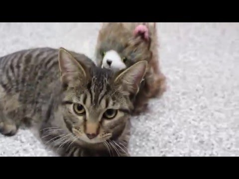 Heartwarming: Rescued kittens & puppies play with Holiday toys