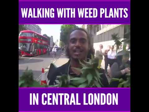 Walking around central London with Cannabis plants WEED