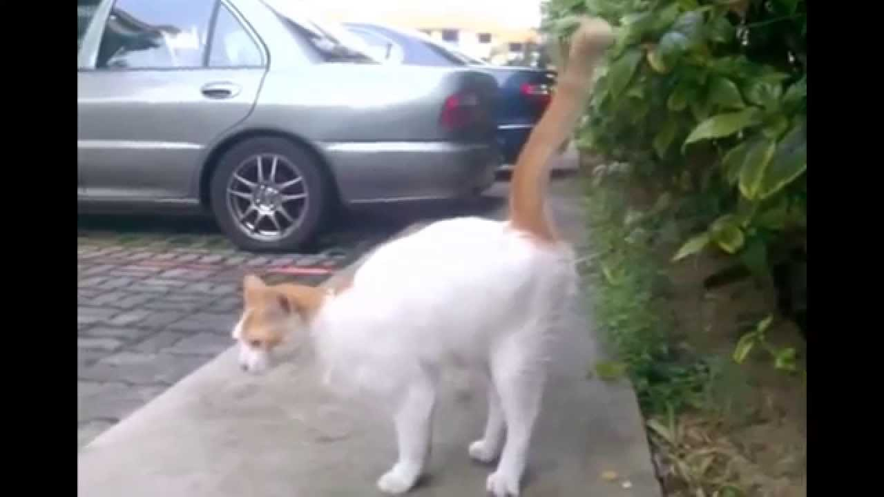 ultraschall gegen katzen katzenschreck test youtube