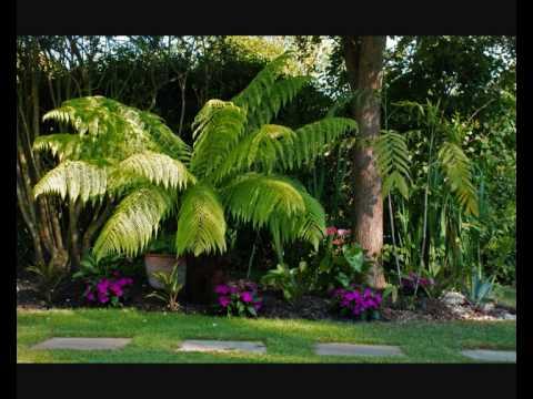 Tropical Garden Ideas Uk steve's uk tropical garden summer 09 - youtube