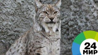 Кыргызстан: спасение фауны - МИР 24