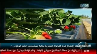 الإمارات تبرئ الفراولة المصرية: خالية من فيروس الكبد الوبائى «A» #نشرة_المصرى_اليوم
