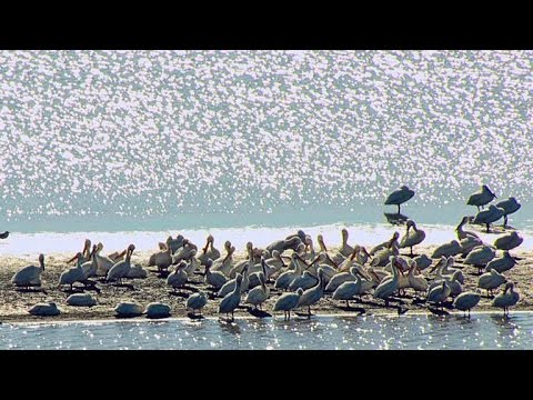 Half Of All North American Shorebirds Use This Rest Stop