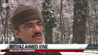 Wildlife Wardens Feeding Stags in Frozen Kashmir