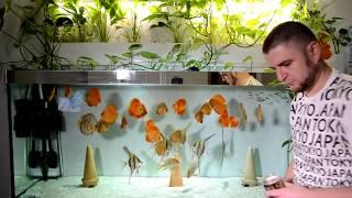 Обзор корма Discusfood Artemia   гранулы для Дискусов и других рыб