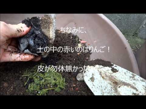 麻炭の再利用で花の肥料に・・・RISの園芸日記