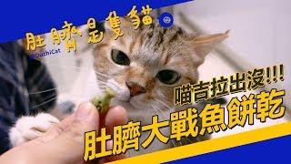 ◖肚臍是隻貓◗ 吃魚魚!不能每一秒都是零食時間嗎?♬