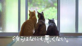 [島暮らし]猫との古民家暮らしは大変だ