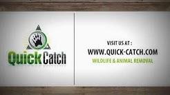 Jacksonville's Wildlife & Animal Removal : Quick Catch's Ryan Boyd