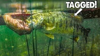 TAGGED BASS! Fishing Remote Lakes for Smallmouth
