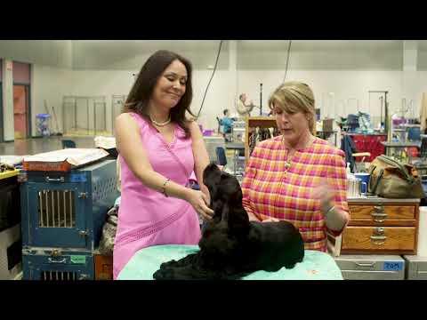 Road to Westminster (RTW):  Breeder Owner Handler Kay Belter