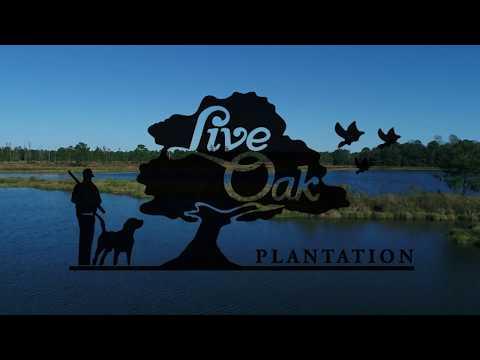 Live Oak Plantation | Guided Trophy Bass Fishing | Adel, GA