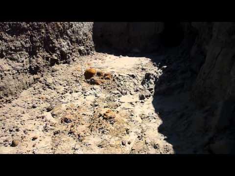 Cretaceous Dinosaur Bones in South Dakota Hell Creek Formation