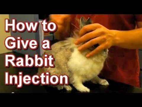 How to Give a Rabbit Injection - Tai Wai Small Animal & Exotic Veterinary  Hospital