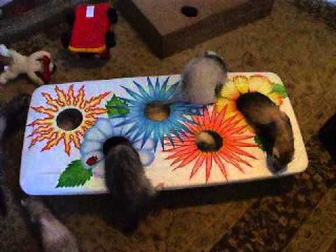 Ideas for homemade ferret toys