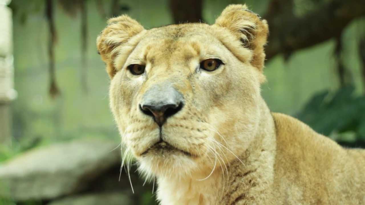 Australia zoo discount coupons 2019
