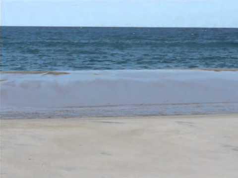 Popular Videos - Sable Island & Nova Scotia