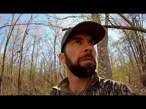 Hunting invasive Wild HOGS with a Crossbow