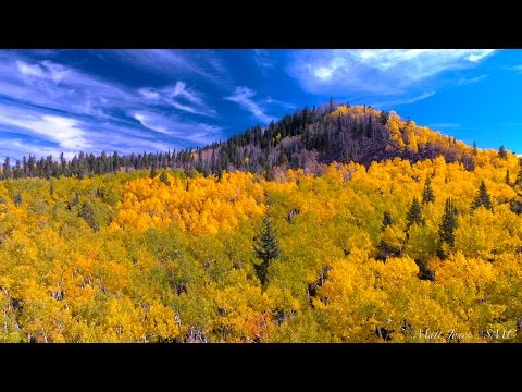 The Grand Mesa Fall Colors 4K