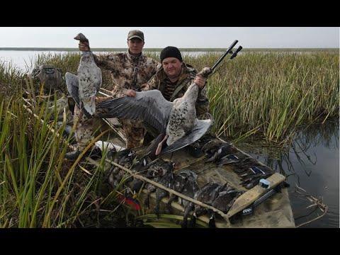 Охота на утку.Внезапный налет гусей. Много утки пришло с моря. Азы выбора места для охоты.