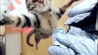 Jumping Cat  Slow Motion