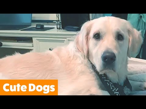 Cut Funny Dog Bloopers | Funny Pet Videos