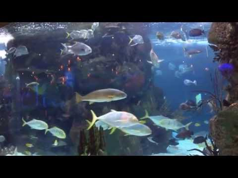 Aquarium Restaurant Nashville - Opryland / Opry Mills Best Restaurant - Nashville Attractions