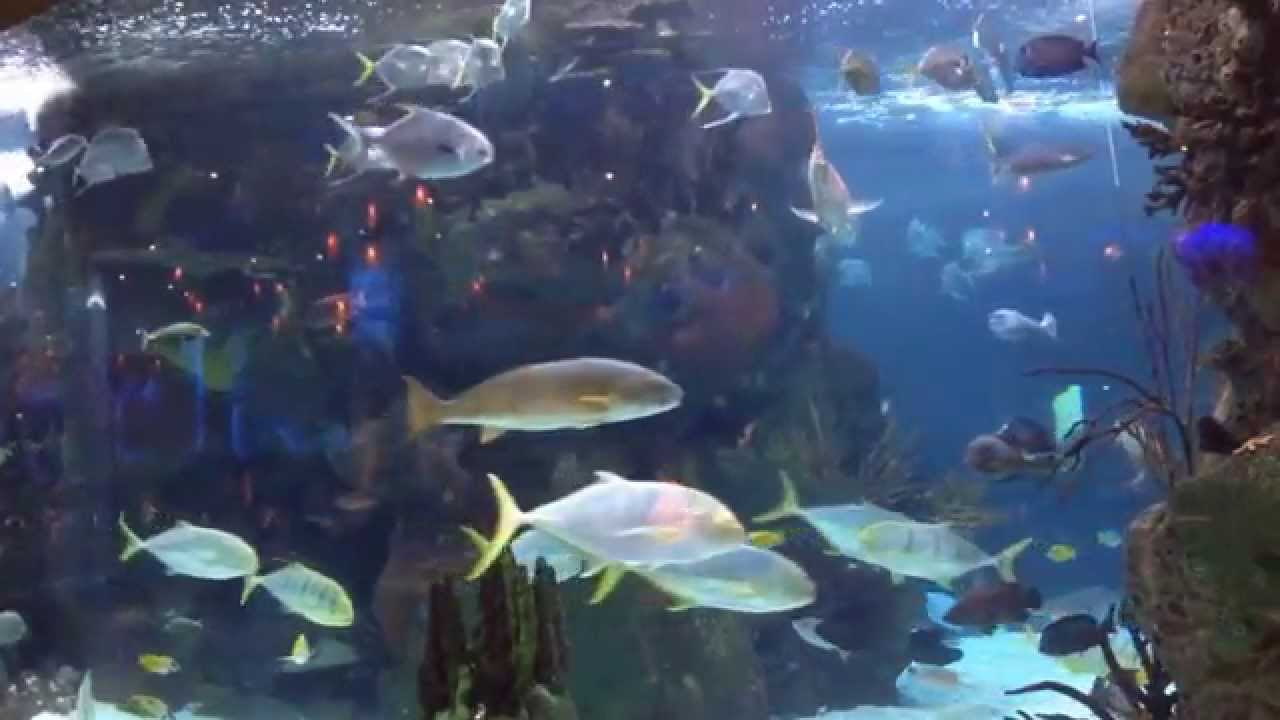 Aquarium Restaurant Nashville Opryland Opry Mills Best