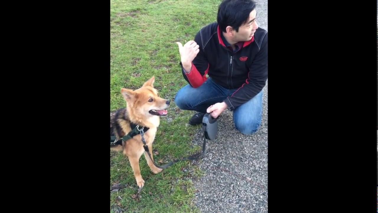 Skittish Dog Training - @1 min I predict dog turns head forward &  backwards  And why
