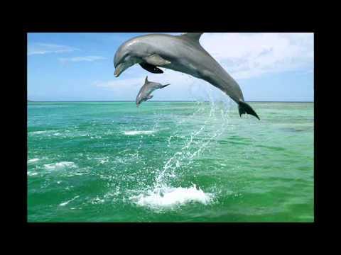 Gregor Theelen- Ocean Symphony / The Irish Sea