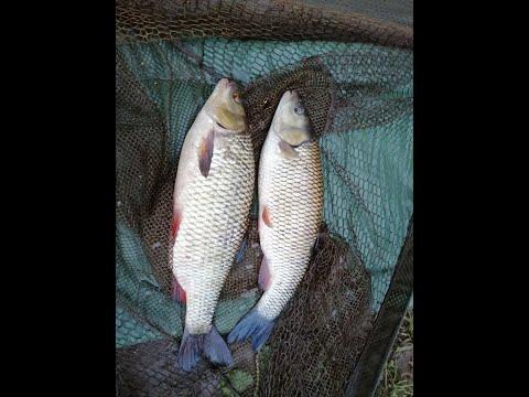 Chub Fishing On River Ribble