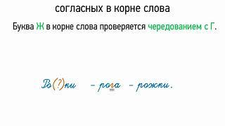 Правописание звонких и глухих согласных в корне слова (5 класс, видеоурок-презентация)